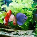 How Often Should I Change My Fish Tank Filter?